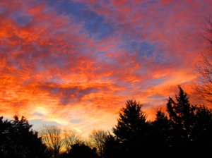 Orange sunrise_5502196405_l